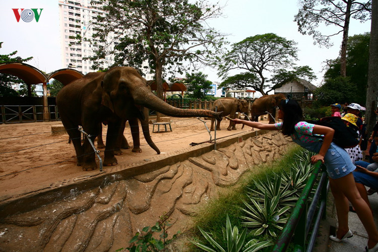Saigon Zoo and Botanical Garden was constructed in 1864. It is Vietnam's largest zoo and botanical garden. Located on Nguyen Binh Khiem Street in District 1, it is home to over a hundred species of mammals, reptiles and birds, as well as many rare orchids and ornamental plants.