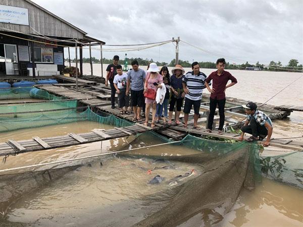 मेकांग डेल्टा में कैन थो शहर में सोन आइलेट पर एक मछली फार्म में आगंतुक